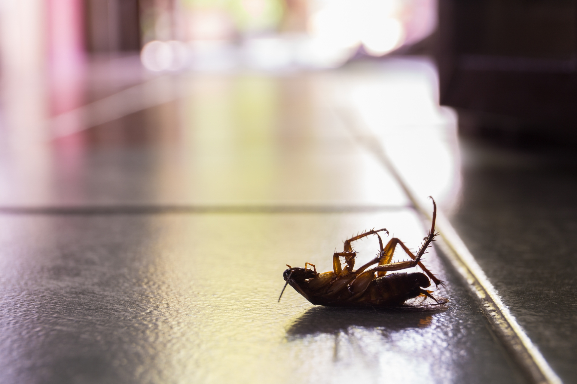 Cockroach Control, Pest Control in Hampton Hill, Hampton, TW12. Call Now 020 8166 9746