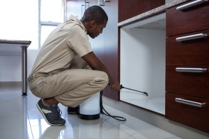 Pest Inspection, Pest Control in Hampton Hill, Hampton, TW12. Call Now 020 8166 9746