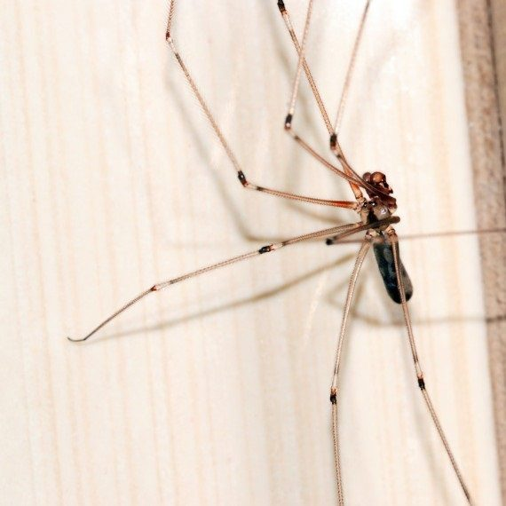 Spiders, Pest Control in Hampton Hill, Hampton, TW12. Call Now! 020 8166 9746